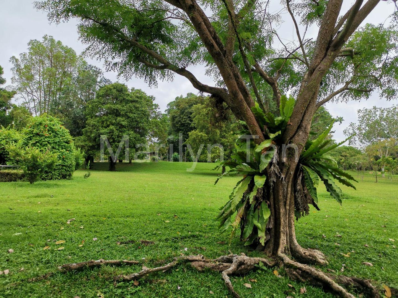 Lush flora at Sembawang Park