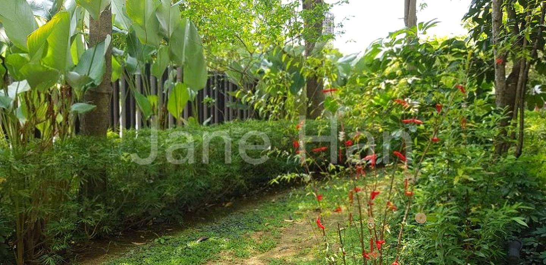 Serene greenery
