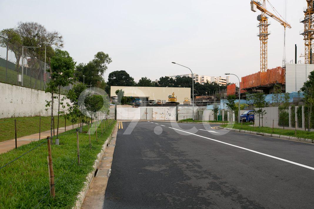 The Rainforest  Street
