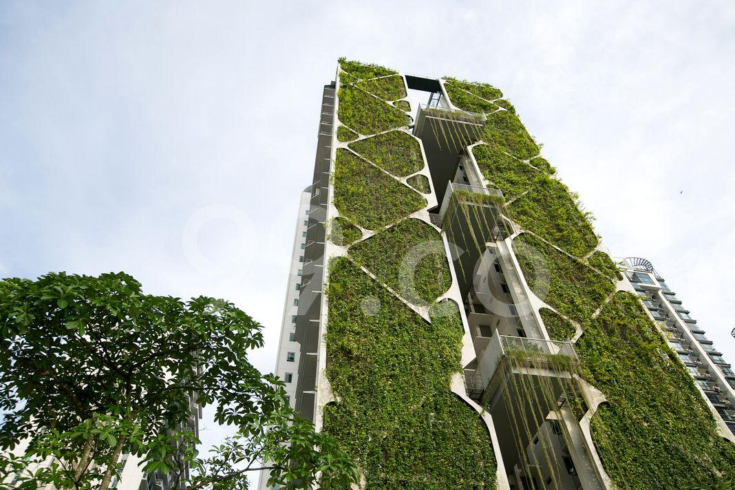 Tree House  Elevation