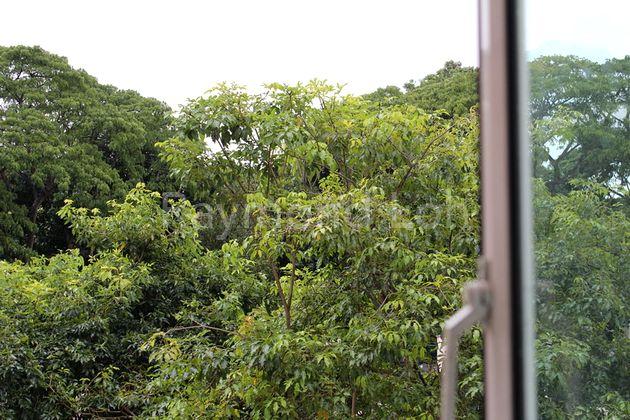 greenery view